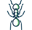 House Ants
